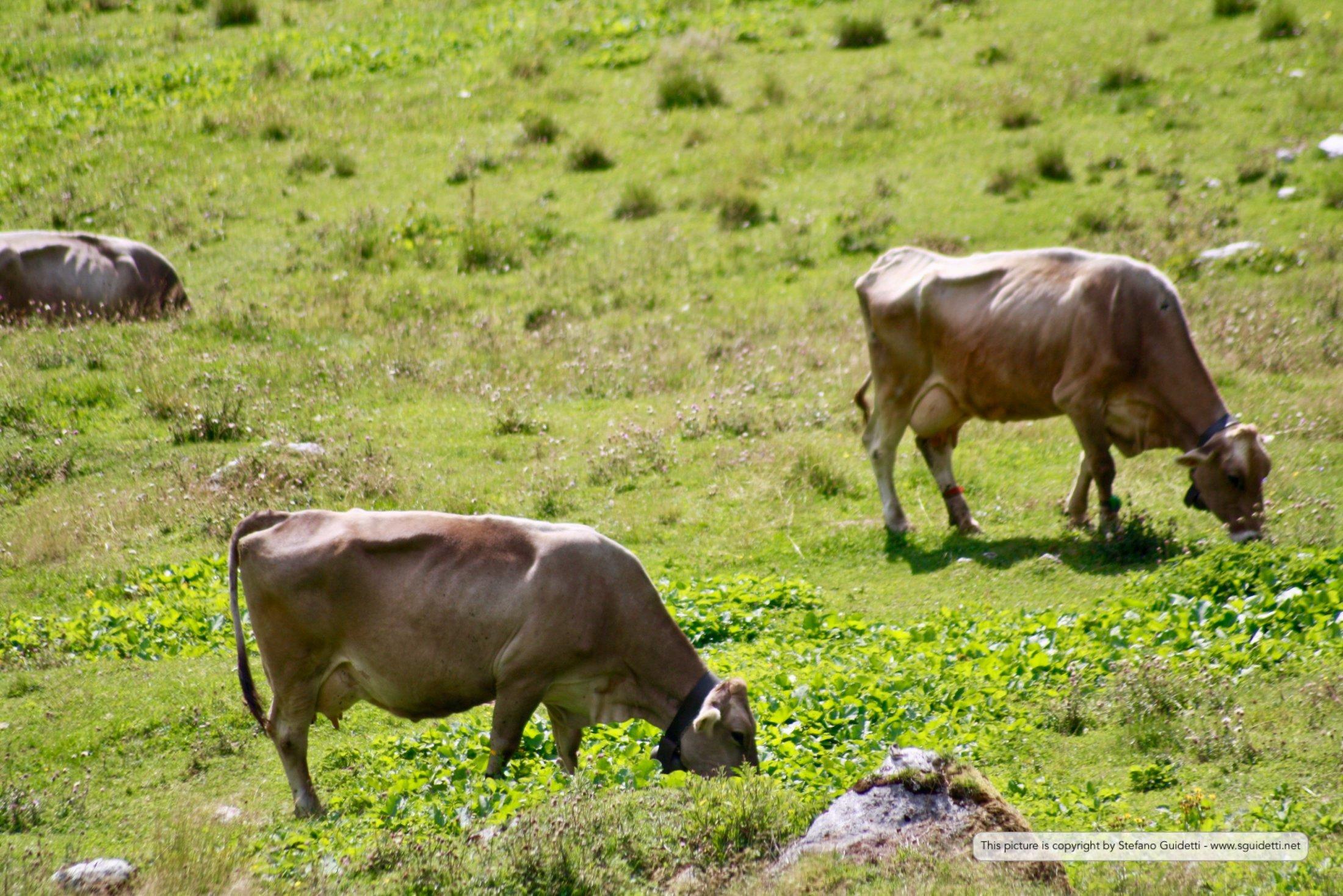 animals_20120808_IMG_0042