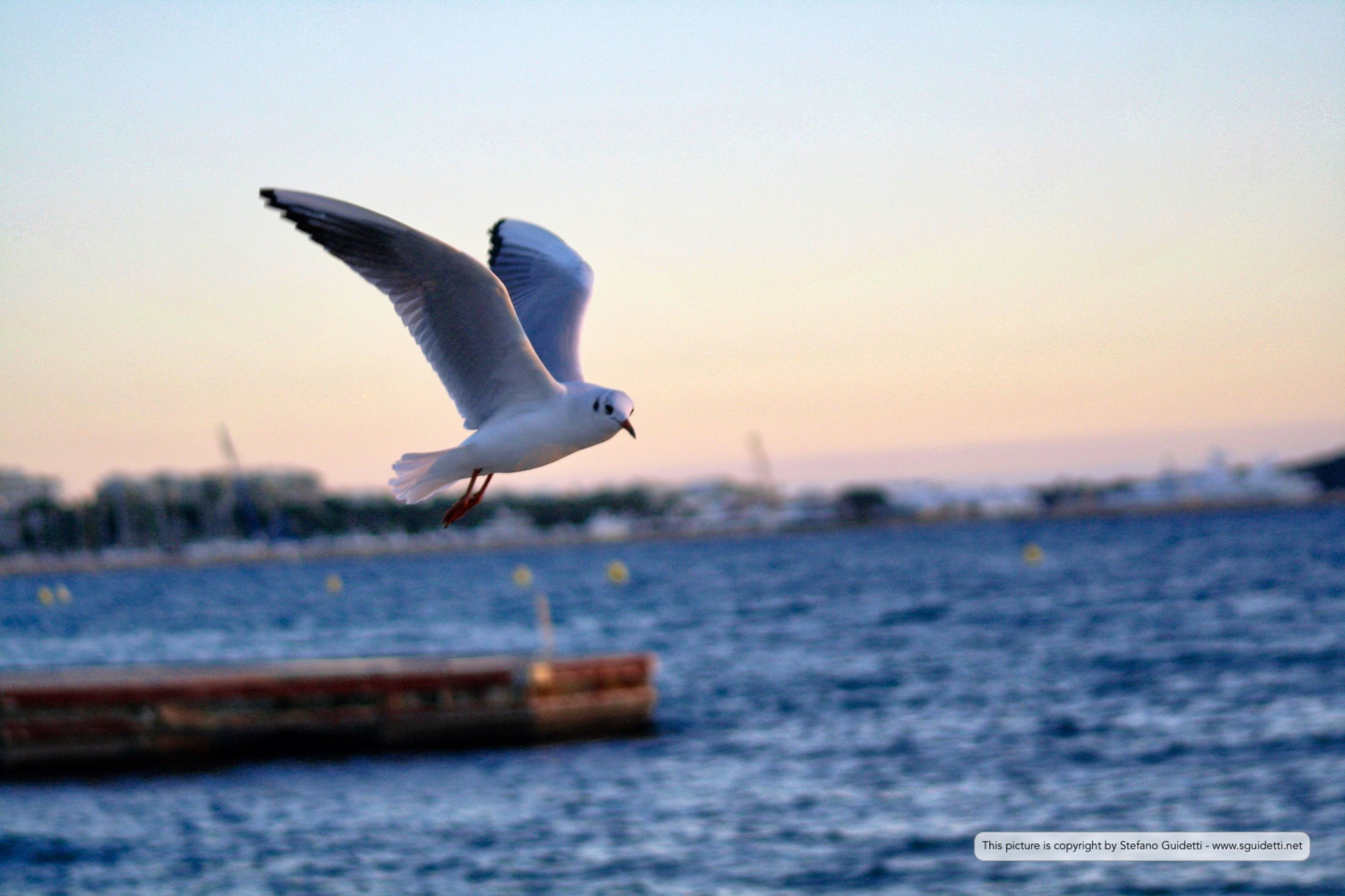 cannes - mougins - antibes_20150105_IMG_0617