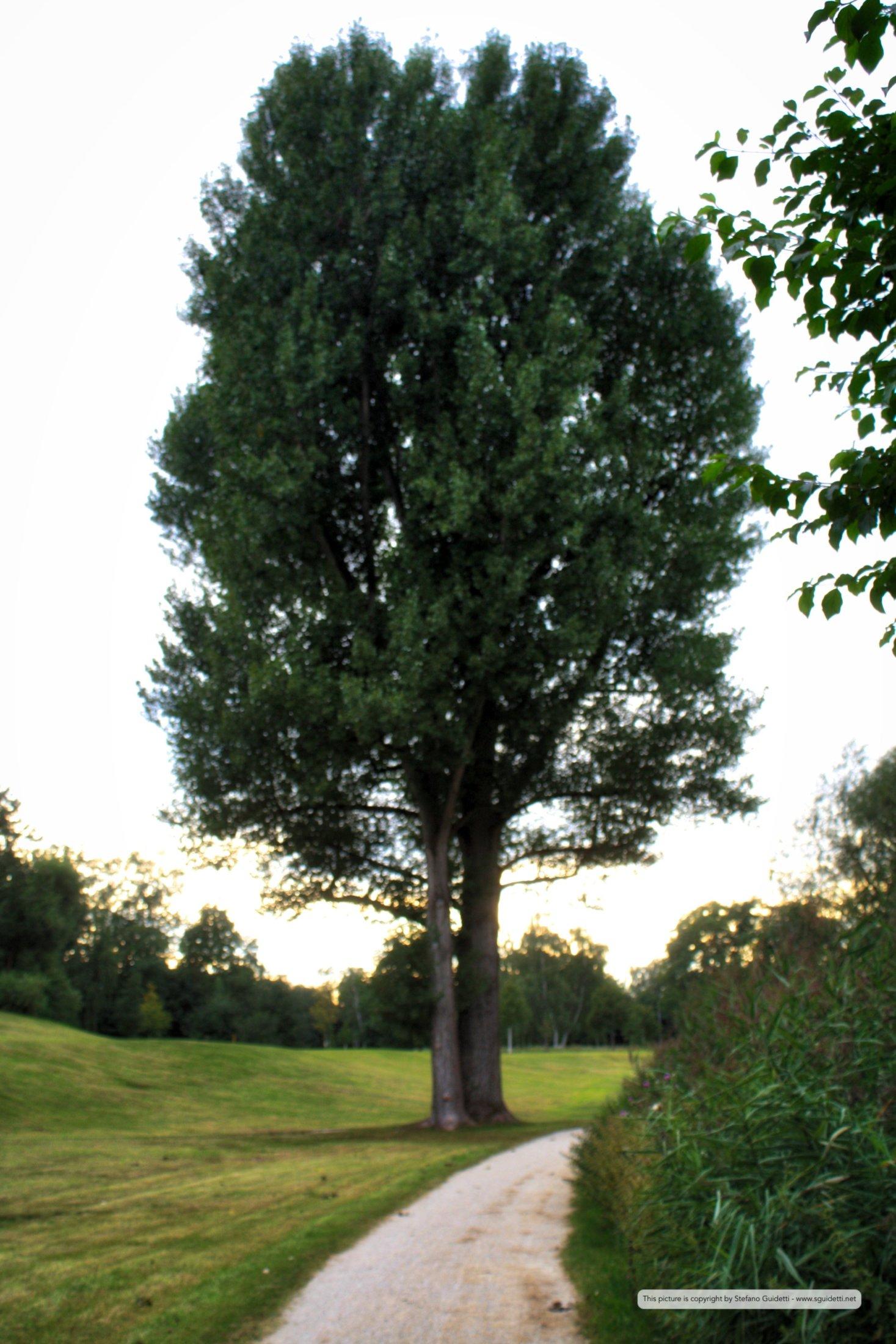 nature_20110812_IMG_0555