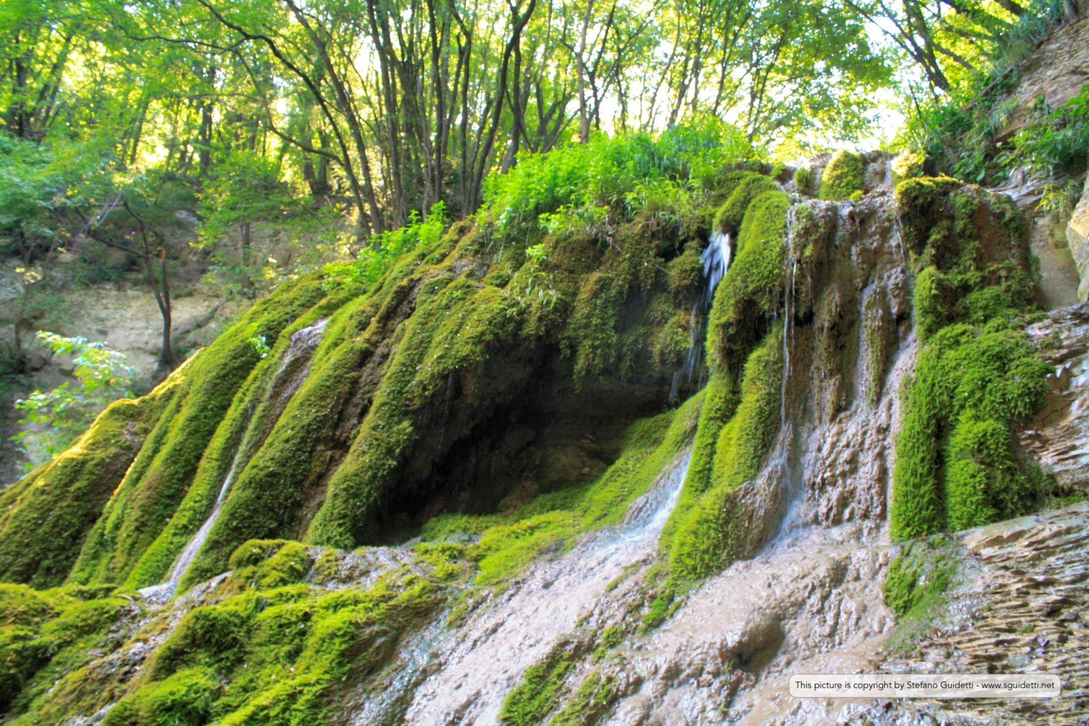 nature_20150807_IMG_0035