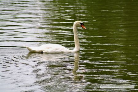 animals_20110812_IMG_0517