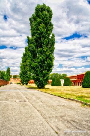 Certosa e cimitero monumentale