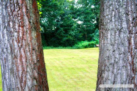 nature_20110812_IMG_0556