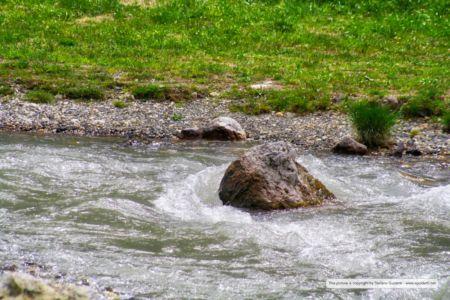 nature_20120809_IMG_0086