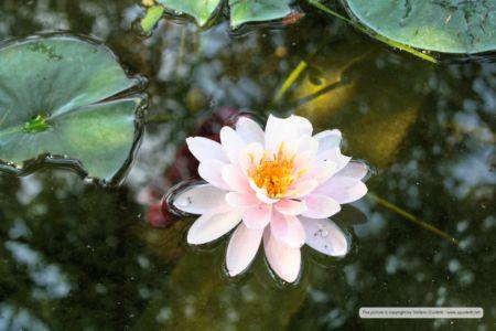 nature_20150602_IMG_0066