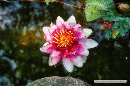 nature_20150602_IMG_0068