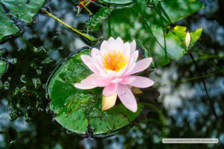 nature_20150602_IMG_0069