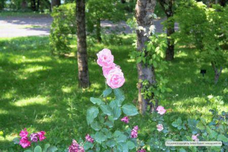 nature_20150602_IMG_0150
